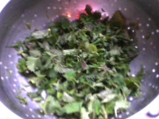 Whilst sweating the onions, rinse the nettle tops in cold water